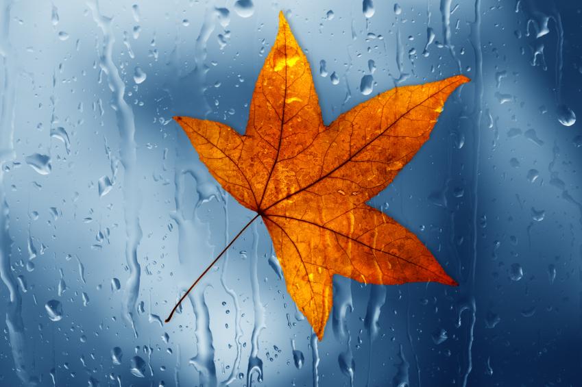 Herbstblatt Wasser Regen Tropfen Glasscheibe