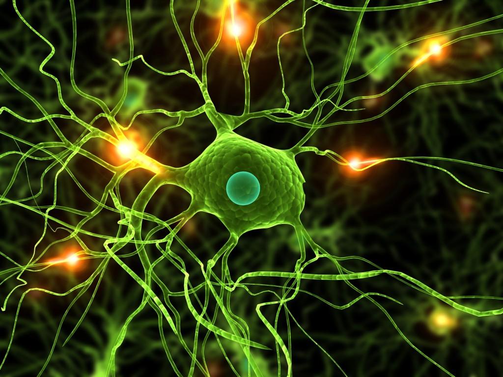 aktive Nervenzellen
